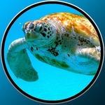 海龟为婴儿